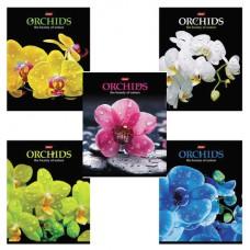 """Тетрадь 48 л., HATBER, клетка, 3D-лак, """"Орхидеи"""""""