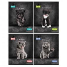 тетрадь 48 листов котики  angry